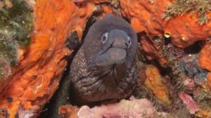 Moray - scuba.